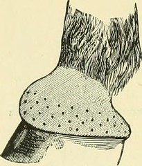 "Image from page 457 of ""The standard horse book, comprising the taming, controlling and education of unbroken and vicious horses"" (1895)"