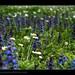 printemps4489_300314