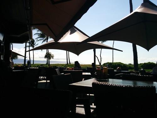 Maui - Lincoln 10 Months