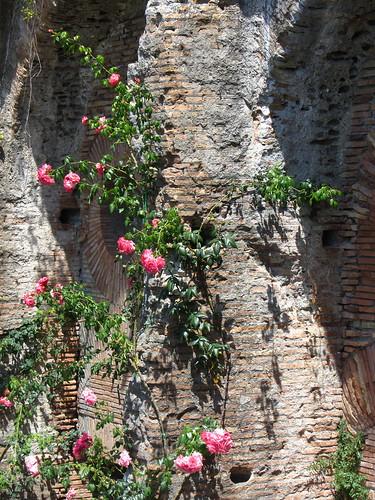 flowers on roman wall