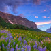 Wildflower Morning by Darren White Photography