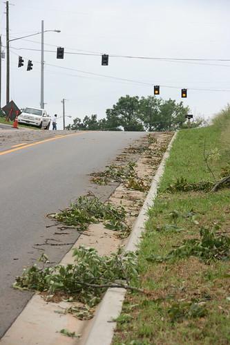 Tree Debris / P2013-0814D033