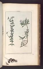 Gardenia Micranthus et Gardenia Radicans - Pierre-Joseph Buc'hoz (1731-1807) [B574636101_RES IN-F 074]