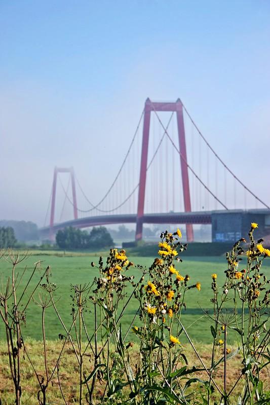 Goldengelchen Emmericher Rheinbrücke im Nebeldunst05