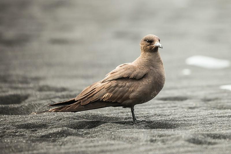 Bird (dunno)