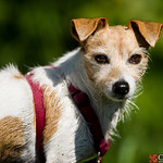 Dog Portrat