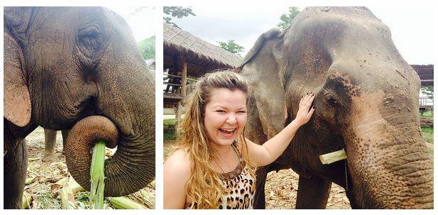 Elephant's Worls