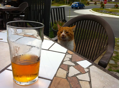 Pub cat in Saint-Faustin