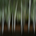 Silver Birch At Night Abstract