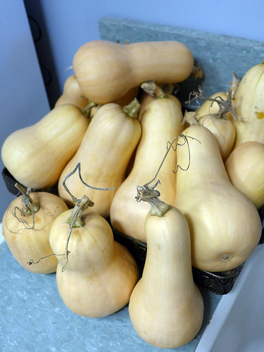 2014-09-22 - Butternut Squash - 0002 [flickr]