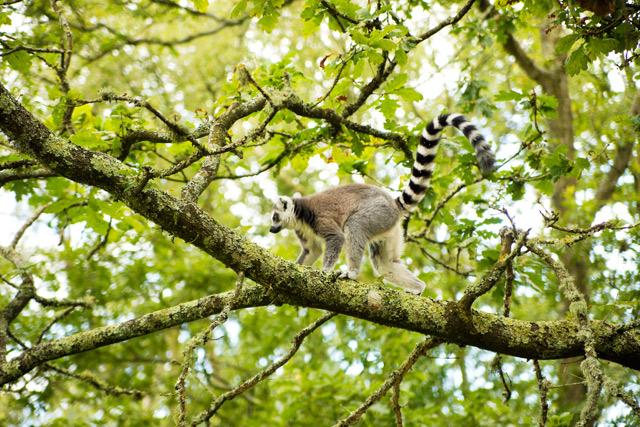 Visiting Monkey World in Dorset