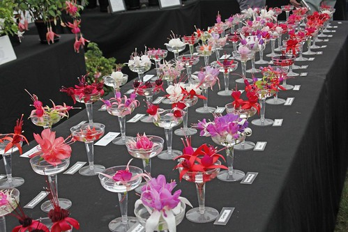 The Malvern Autumn Show 2014