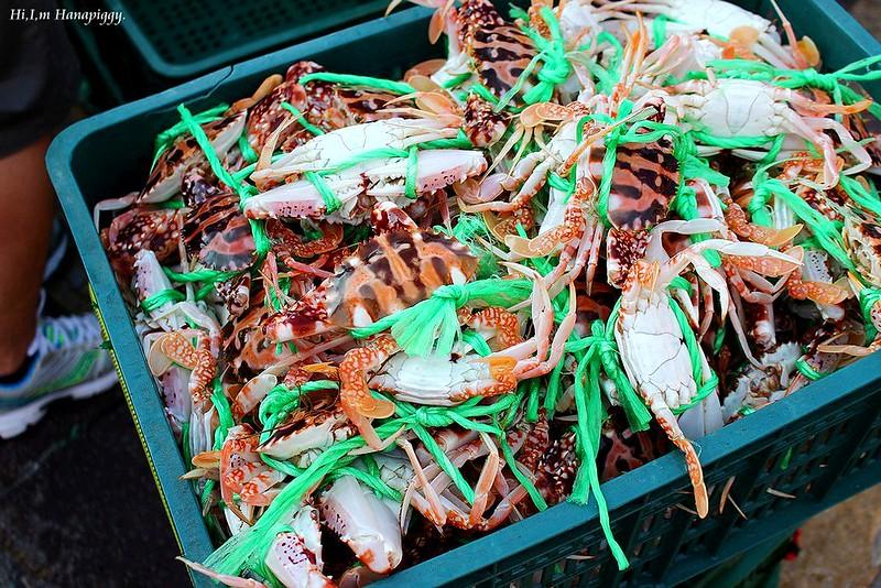 西北萬里蟹 (123)
