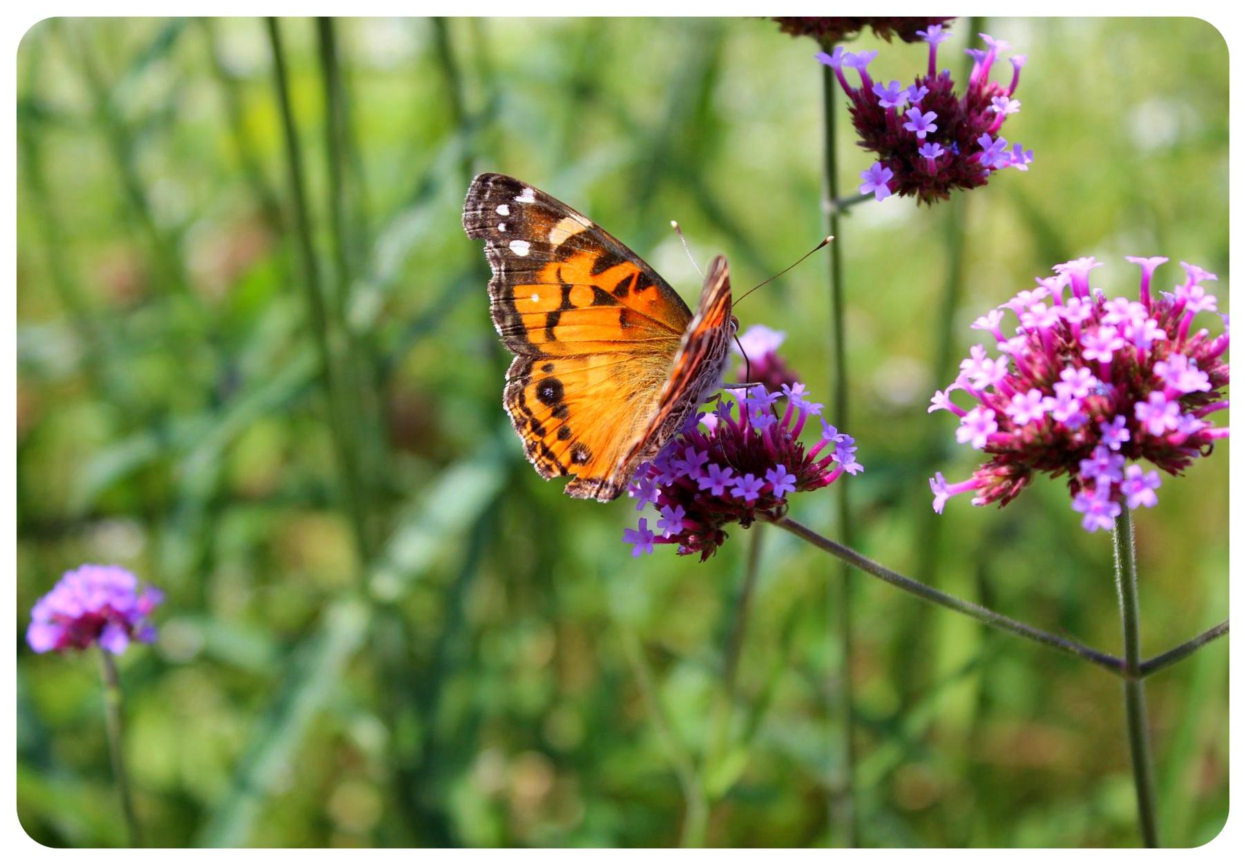 brooklyn botanical gardens butterfly