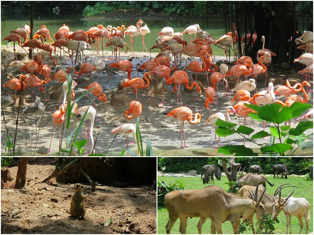 Chimelong Zoo