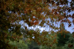lotta autumn leaves