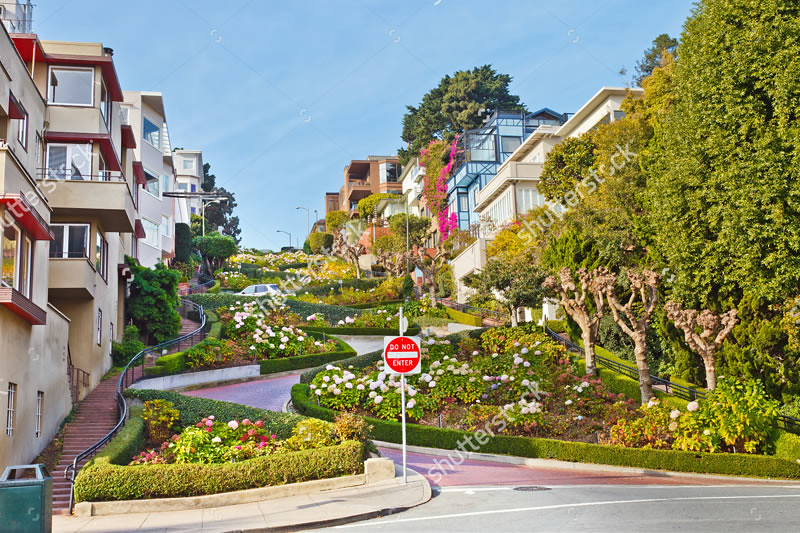 stock-photo-lombard-street-in-san-francisco-80832514 copy