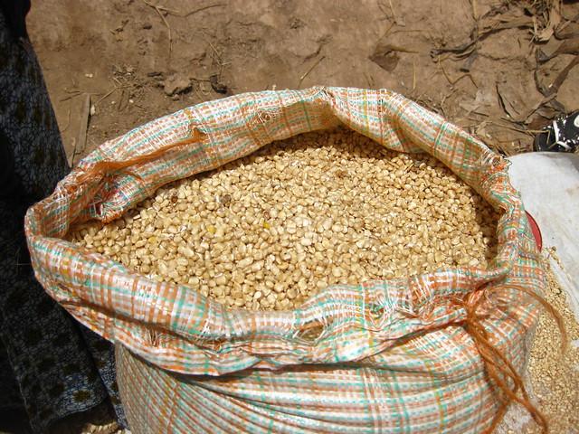 Maize (Tanzania)