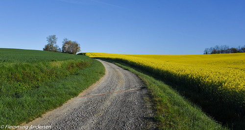 Green and Yellow road
