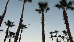 Dusk in Palm springs [Flickr]