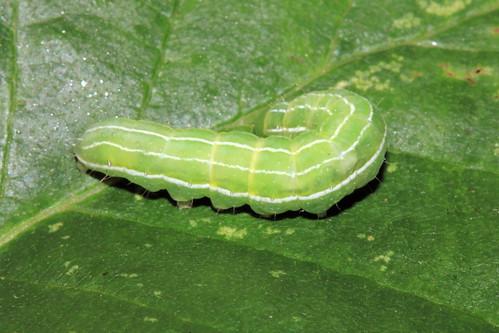 Caterpillar 29547