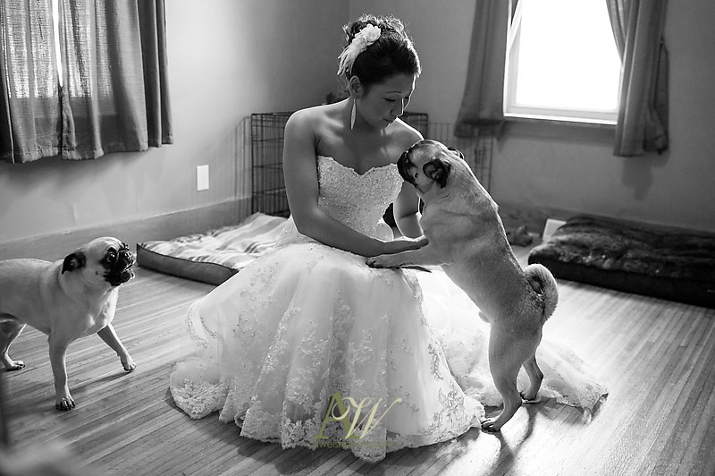 Rochester NY Wedding photographer Andrew Welsh Locust Hill Country Club Wedding Photographs Photos Dogs Doggies Canine Pug Pugs Pet Pets