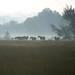 Horses in the fog - photo by Kelly Idema
