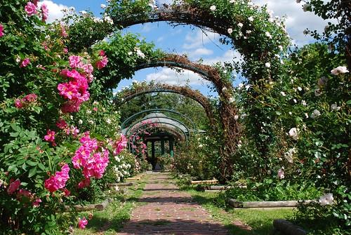 Thornden Park Rose Garden