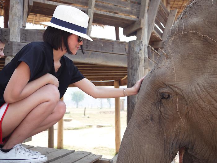 Elephant Nature Park Chiang Mai-12