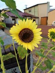 Oshu-shi, Iwate