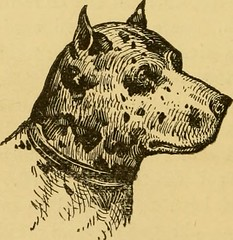 "Image from page 151 of ""Breeding, training, management, diseases & c. of dogs:"" (1877)"