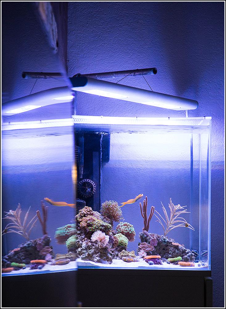 36x18x18 Aquarium