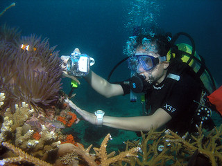 "<img src=""padi-diving-fan-canyon-tioman-island-malaysia.jpg"" alt=""PADI diving, Fan Canyon, Tioman Island, Malaysia"" />"