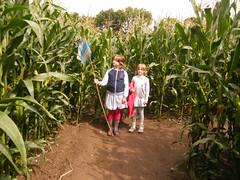 agriculture, farm, field, soil, maize, crop, rural area, plantation,