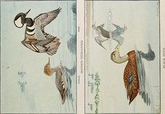 """Image from page 122 of """"The book of birds; common birds of town and country and American game birds"""" (1921)"""