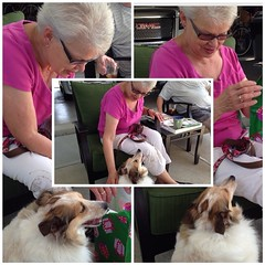 Today is my mum's birthday & Gracie helped her open presents #goodgirl #dogsofinstagram #instacollage #ilovemydogs #sheltie