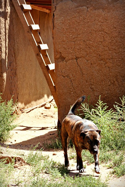Dog at Taos Pueblo