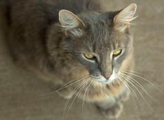 Cat portrait 1.jpg