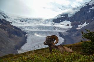 Rockies_2014_451