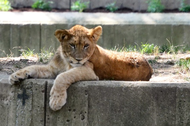 Cub on a Ledge!