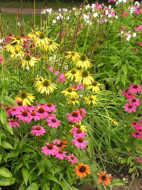 Echinacea 'Leilani', 'Powwow Wild Perry' & 'Tangerine Dream'