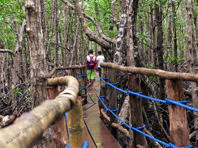 Mangrove Eco Park. El Nido, Palawan, Philippines