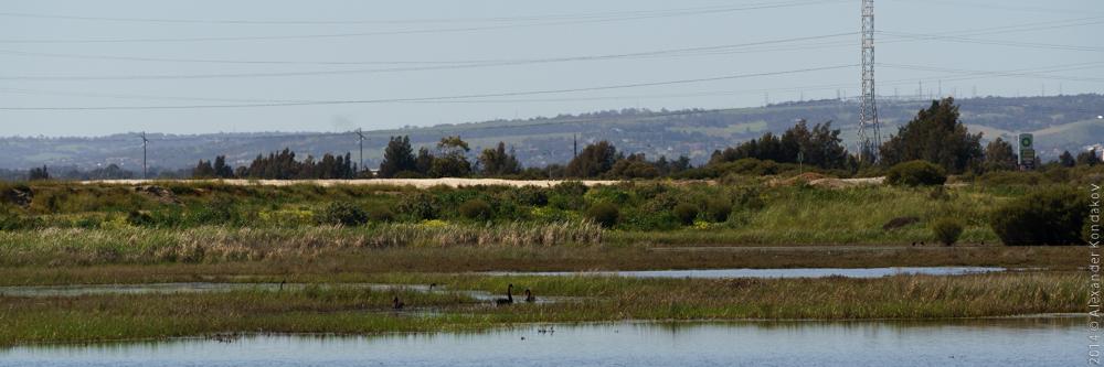 Birds SA Adelaide-5