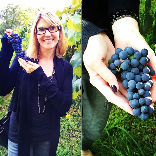Picking Concord Grapes at Meadow Mist Farm with the Welch's RD via MealMakeoverMoms.com/kitchen