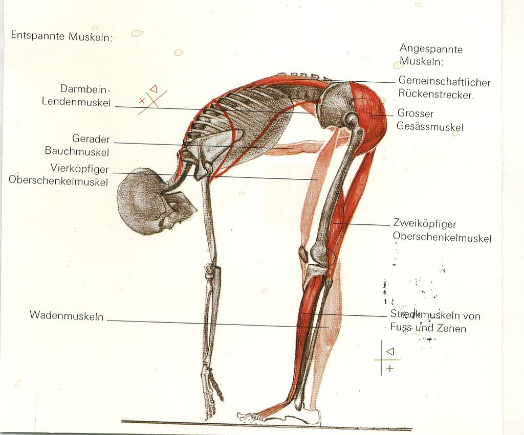 Beste Anatomie Wadenmuskeln Bilder - Menschliche Anatomie Bilder ...