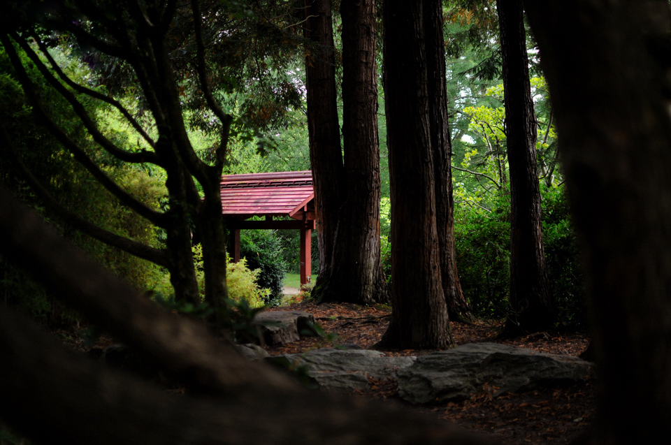 Jardin-Japonais-1
