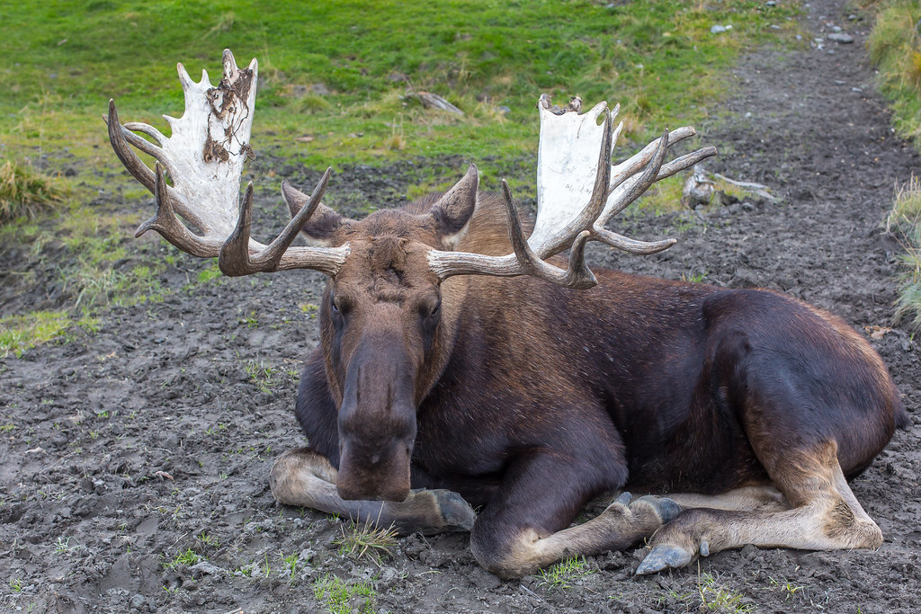 Alaska. Alaska Wildlife Conservation Center