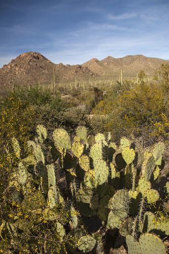 tucson arizona places saguaronationalpark saguaro cactus national park