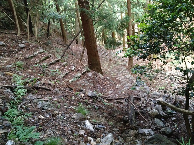 釜ヶ谷山 龍神コース 登山道