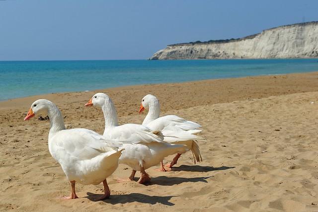 (Explored) Eraclea Minoa, Sicily 059
